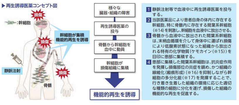 ステムリム再生誘導医薬コンセプト図