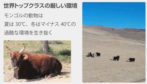 モンゴルの社会問題